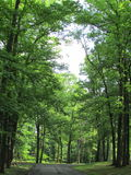 Trees at Roosevelt Park in Edison, NJ, USA. Г. Royalty Free Stock Photo