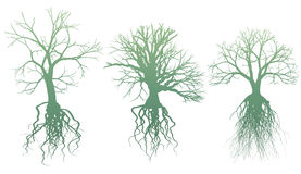 Trees with roots Royalty Free Stock Photo