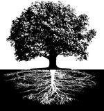Trees with roots. This image is a vector illustration and can be scaled to any size without loss of resolution Stock Photos