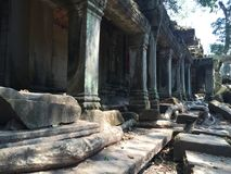 Trees and roots growing over the ruins of Ta Prohm temple stock images