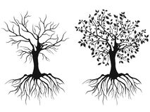 Trees with roots. Isolated trees with roots in spring and autumn from white background Stock Photos