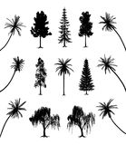 Trees with roots and palms. Collection of trees with roots and palms. EPS file available Stock Photo
