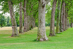 Trees in row Stock Images
