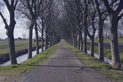 Trees in a row Royalty Free Stock Photos