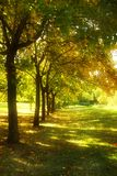 Trees in a row. Row of trees in a park with glowing effect from sun rays Stock Photos