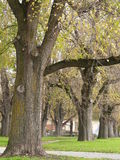 Trees row. A row of nice trees in autmn Stock Images