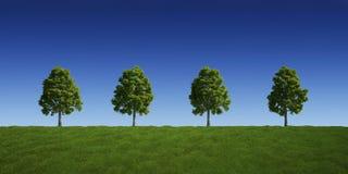 Trees on a row Stock Photo