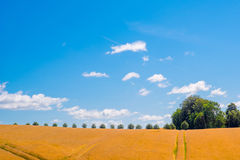 Trees on a row in a countryside landscape Royalty Free Stock Images