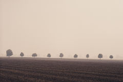 Trees in a row on the field Royalty Free Stock Images