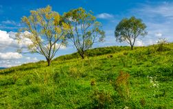 Trees in a row on a hillside meadow. Beautiful sky behind the scenery stock images