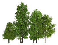 Trees in a row isolated on white 3d illustration Stock Image