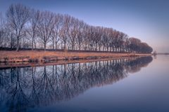 Trees. Row of Trees in the Netherlands Stock Photography
