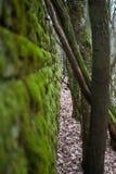 Trees and ruin Royalty Free Stock Photos