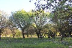 Trees at Ruins of Ancient City of Biblical Kedesh in Israel Stock Photos