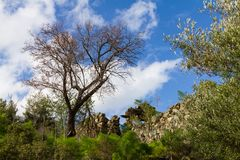 Trees and ruins of the old derelict village of Apiliki in Cyprus Royalty Free Stock Photos