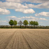 Trees in a rural landscape Royalty Free Stock Photos