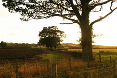 Trees. Rural panorama with beautiful trees Royalty Free Stock Photography