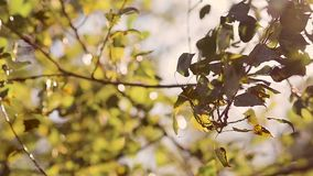 Trees rustle with leaves on wind. Trees rustle with green leaves on strong wind stock video