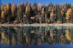 Trees's mirror in the river, Kanas, xinjiang Stock Photos