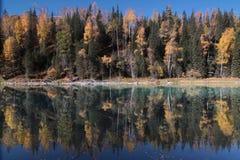 Trees's mirror in the river, Kanas, xinjiang Stock Photos