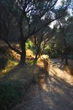 Trees on Samos Stock Image