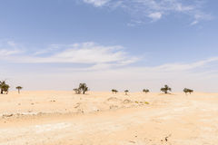 Trees among sand dunes in Rub al-Khali desert (Oman) Royalty Free Stock Photo
