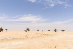 Trees among sand dunes in Rub al-Khali desert (Oman) Royalty Free Stock Photo