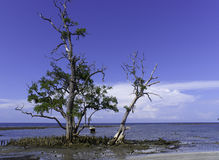 Trees on sandy coastline Stock Images