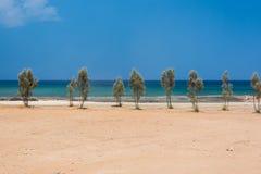 Trees on sandy sea shore Royalty Free Stock Photos