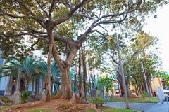 Trees in Santa Cruz Royalty Free Stock Images