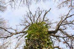 Trees scary royalty free stock photo