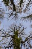 Trees scary royalty free stock photos