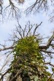 Trees scary stock photo