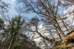 Trees in Scotland Royalty Free Stock Photography