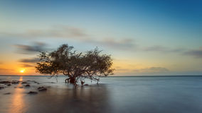 Trees in the Sea island THAI. 1 Royalty Free Stock Photo