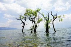 Trees in the sea Royalty Free Stock Photography