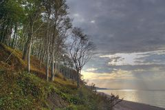 Trees at the sea, sunset. Tall trees on a high sea coast, the sun is setting, sun rays peering through the clouds, empty beach. The Baltic Sea. Unset, Poddabie Royalty Free Stock Photography