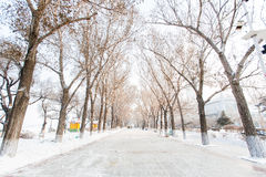 Trees season snow Stock Images