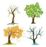 Trees in seasons. Artistic vector illustration stock illustration