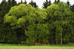 Trees seclusion. View of seclusion trees in spring period Stock Images