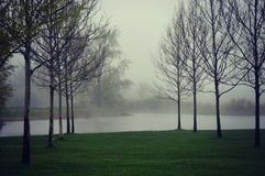 Trees See-Nebel Stockbilder