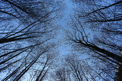Trees seen from below Stock Photo