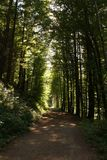 Way through a Forest royalty free stock photography