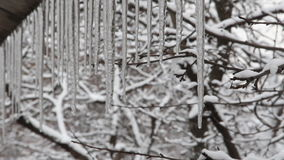 Trees Seen through Dripping Icicles. In Wintertime stock video footage