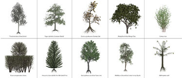 Clipart Trees. 10 selected hi-rez trees against a white background Stock Photography