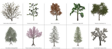 ClipArt Trees Stock Photos
