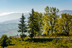 Trees on serpentine on autumn day. Lovely scenery in Carpathian countryside Royalty Free Stock Image