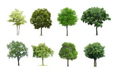 Trees set isolated on white background. royalty free stock images