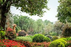Trees in the shade garden.  stock image