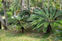 Trees in the shade garden.  royalty free stock photos